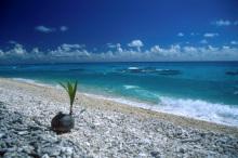タヒチ伝道のブログ-発芽椰子の実