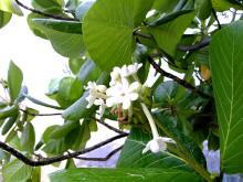 タヒチ伝道のブログ-kahaia 001